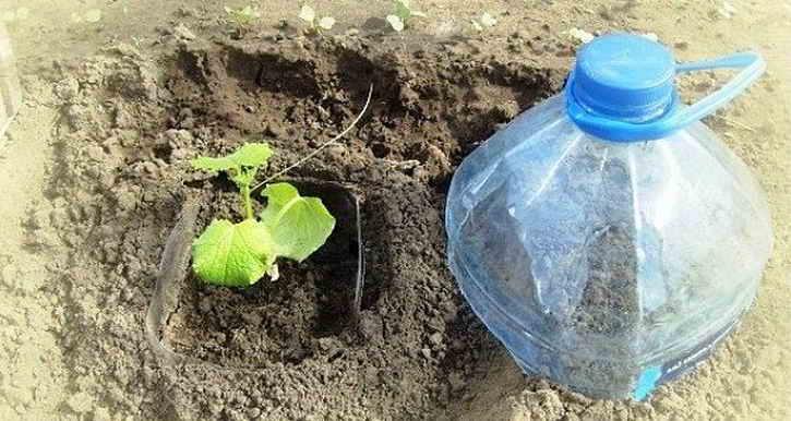 огурцы в пластиковых бутылках