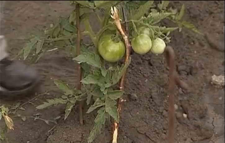 подпорки для томатов
