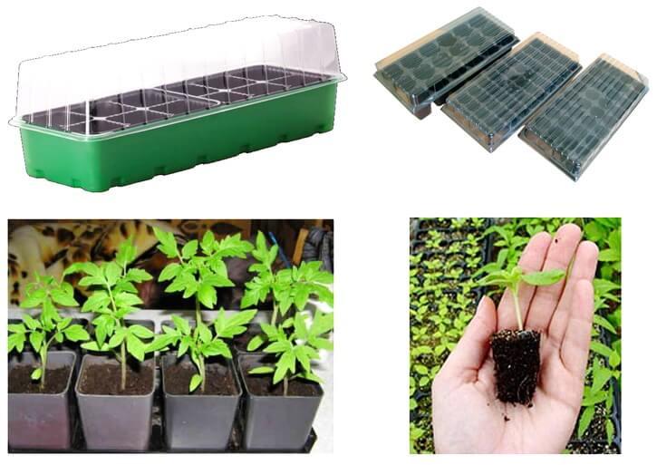 Линия для рассады посев семян рассады в кассеты 25