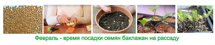 посадка семян баклажана