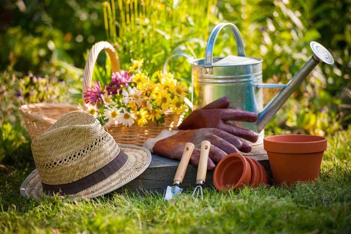огород в июле что делать
