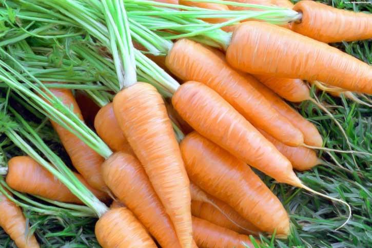 когда выкапывать морковь