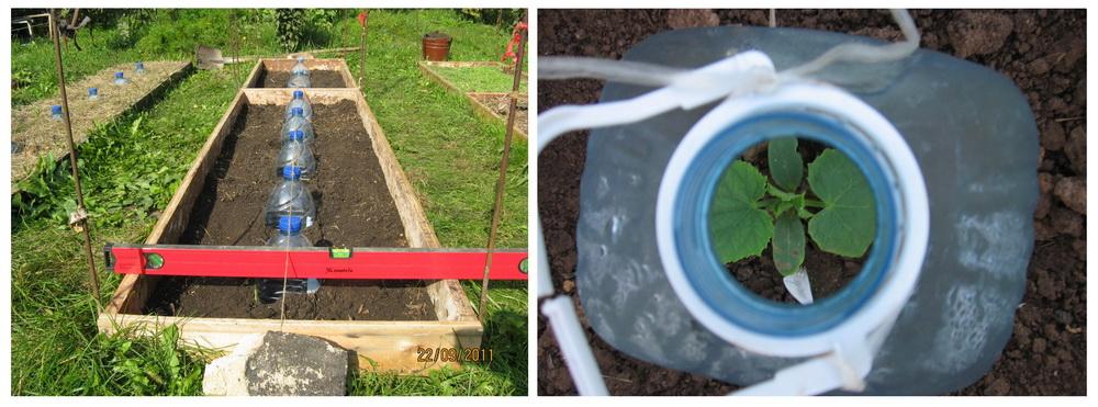 мини-парники на огороде для бахчевых
