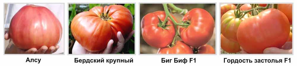 крупноплодные томаты сорта и гибриды