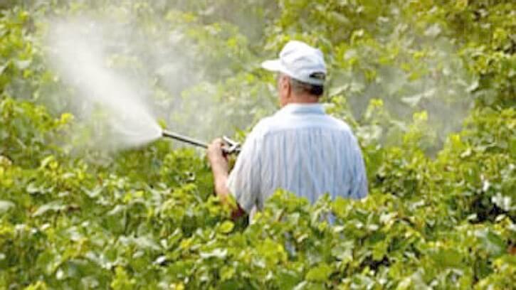 опрыскивание растений карбамидом