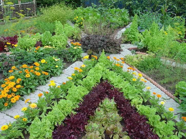 защитить огород от вредителей
