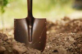 работы в огороде и саду в ноябре