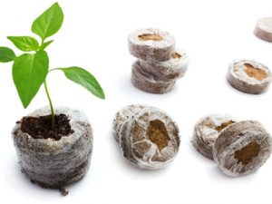 торфяные таблетки для выращивания рассады