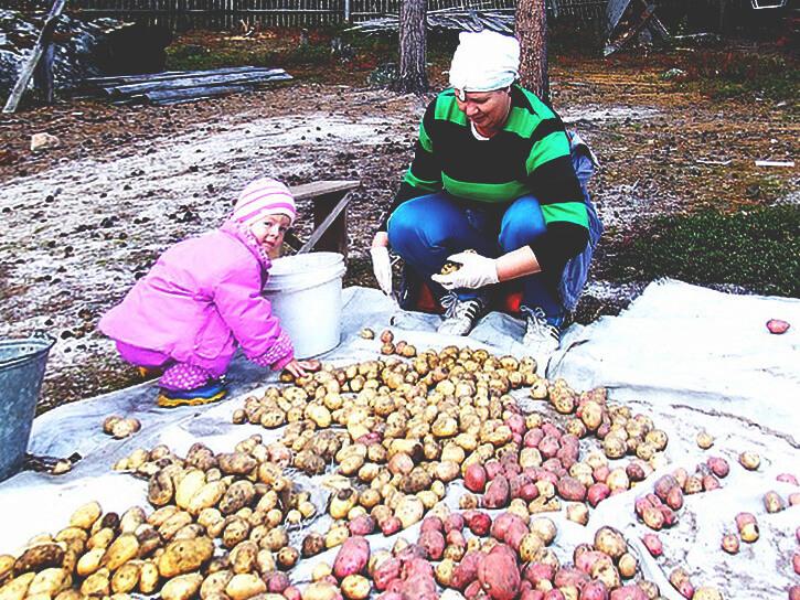 обработка посадочного картофеля
