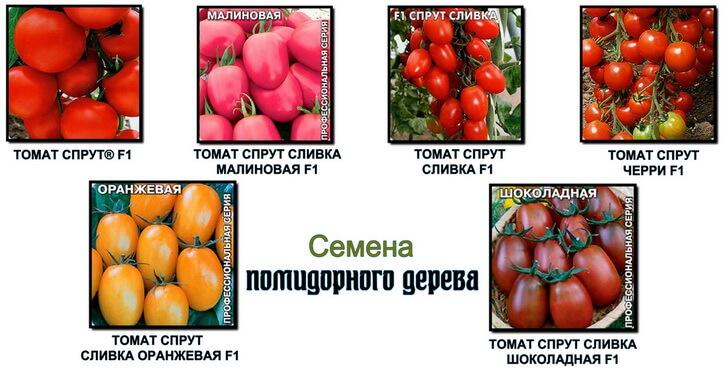 семена помидорного дерева