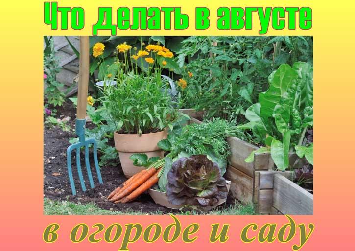 огородные работы в августе
