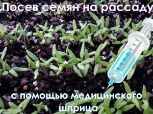 посадка семян шприцем