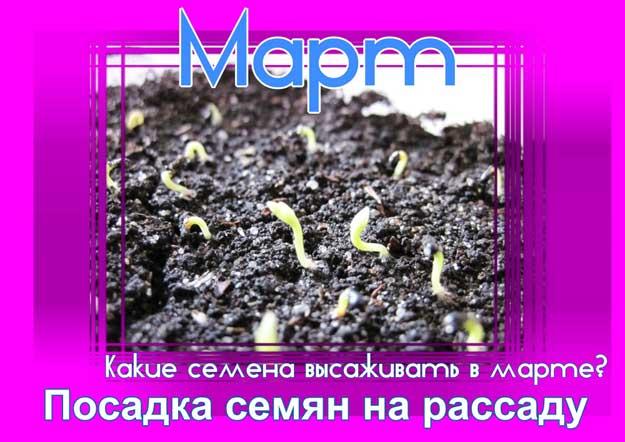посадка семян в марте