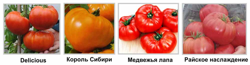 крупноплодные сорта томатов