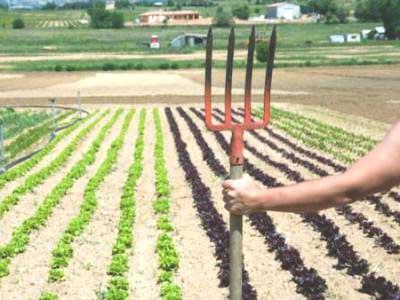 чередование посадки овощей на огороде