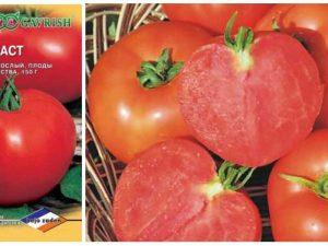 томат полфаст F1 - производитель Гавриш