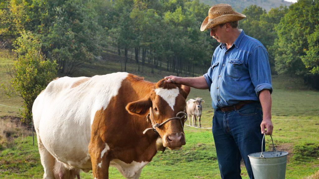 Чем может болеть корова после родов