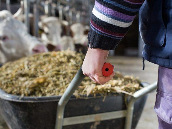 Корма для повышения удоев коров