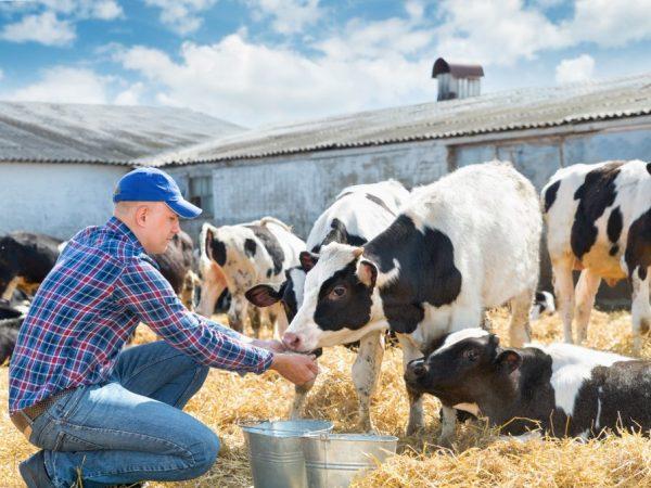 Витамины для коров