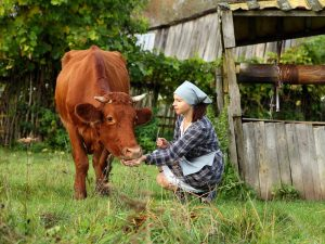В домашних условиях корова живет дольше, чем на ферме