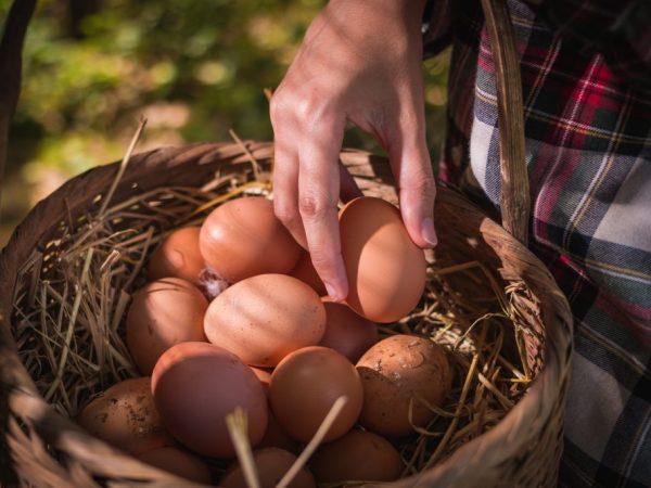 У кур породы Доминант годовая яичная продуктивность 320 шт
