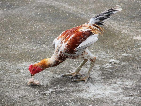 Один из факторов, который способствует появлению паразитов - это присутствие в пище переносчиков гельминтов: слизней, дождевых червяков
