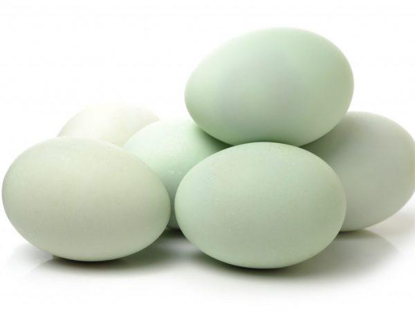 Яйца для инкубатора лучше собирать весной