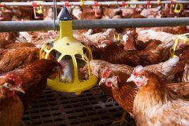 Изготовление кормушки для кур