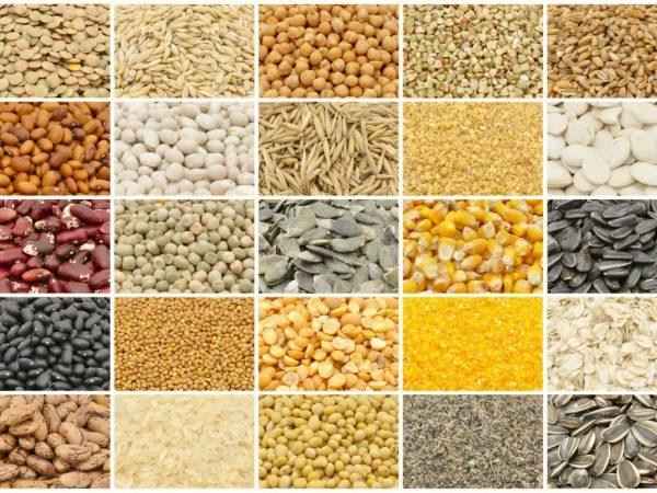 Благодаря злаковым кормам утки быстро набирают вес и растут. Зерно легко переваривается и нравится как молодняку, так и взрослым птицам