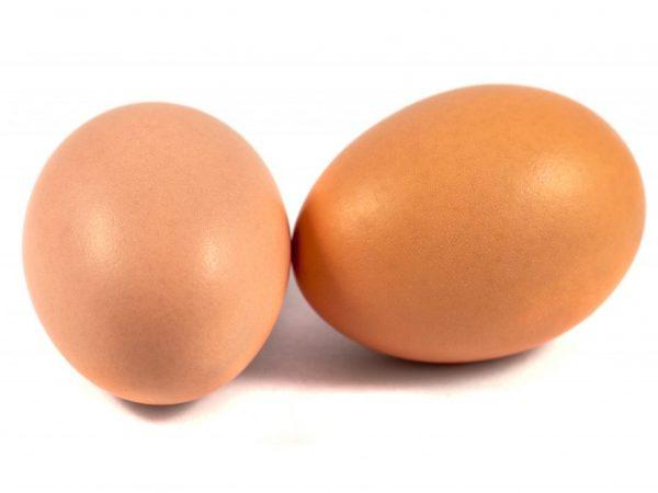 Бройлеры начинают нестись в 9-10 месяцев, и количество их яиц не превышает 2–3 штук в неделю