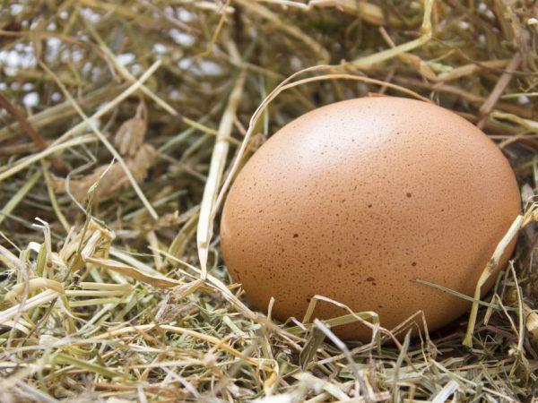 Куриные яйца подразделяют на сорта: отборные, первый, второй, третий