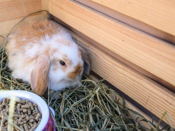 Как сделать сенник для кроликов своими руками