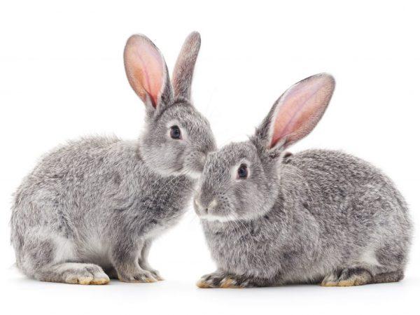 Как в домашних условиях ухаживать за кроликами