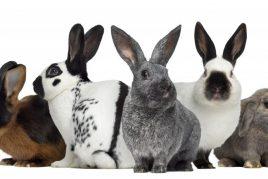 Основное отличия зайца от кролика