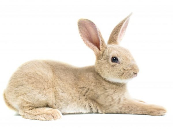 Особенности разделки кролика