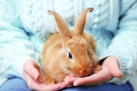 Интересные факты о домашних кроликах