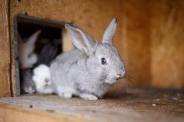 Самодельные домики для кроликов
