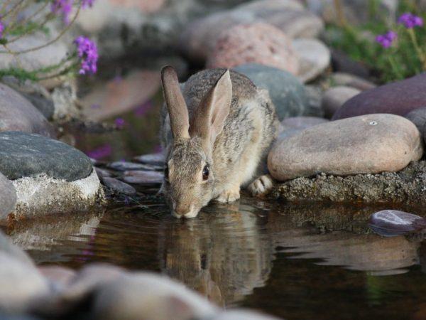 Чем можно поить кроликов и как это делать
