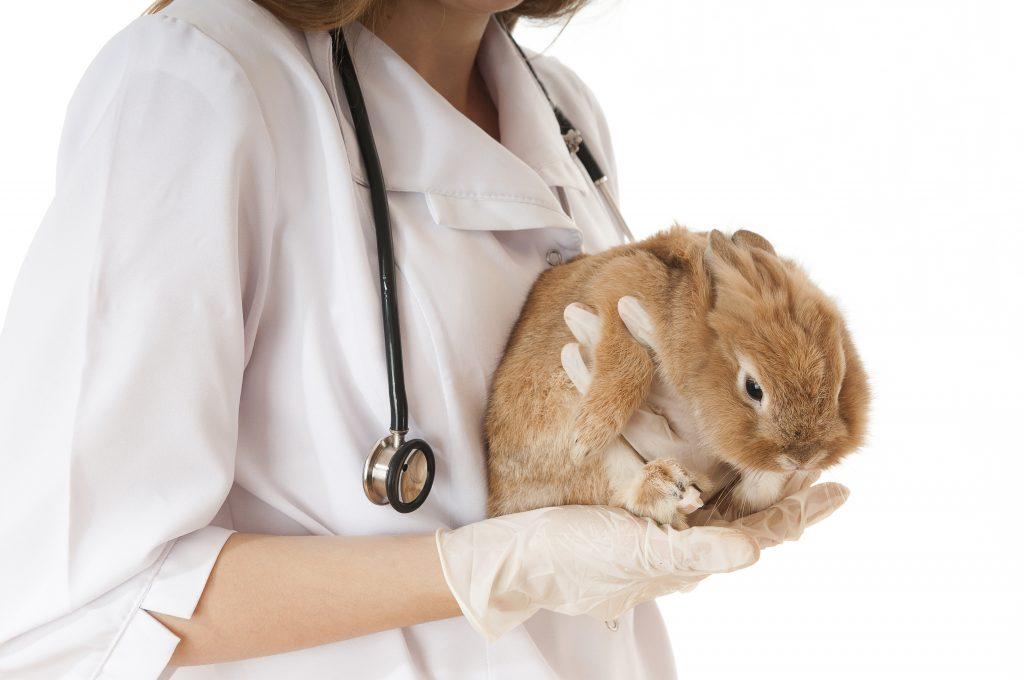 Почему у кролика мокрая мордочка