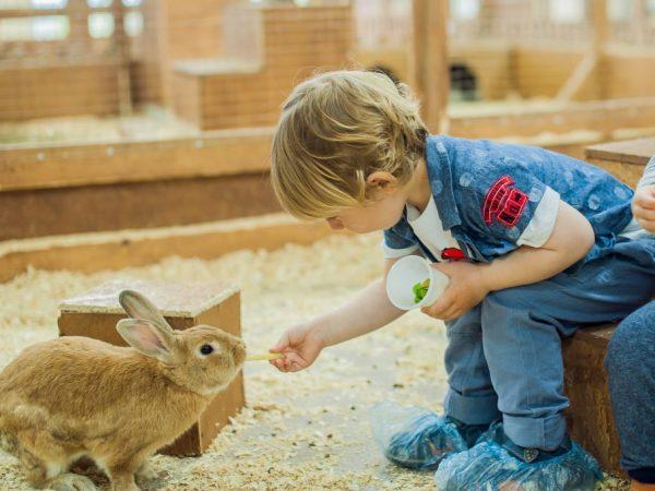 Строительство практичной кроличьей фермы