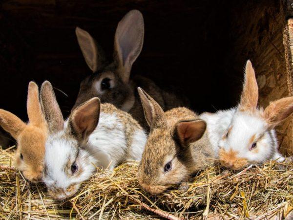 Строительство сарая для кроликов своими руками