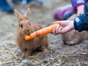 Какие продукты можно давать кролику