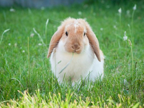 Какие травы можно и нельзя давать кроликам