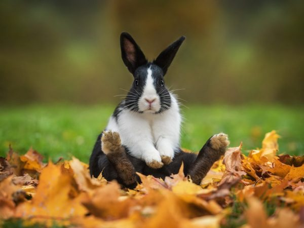 Особенности мяса кролика