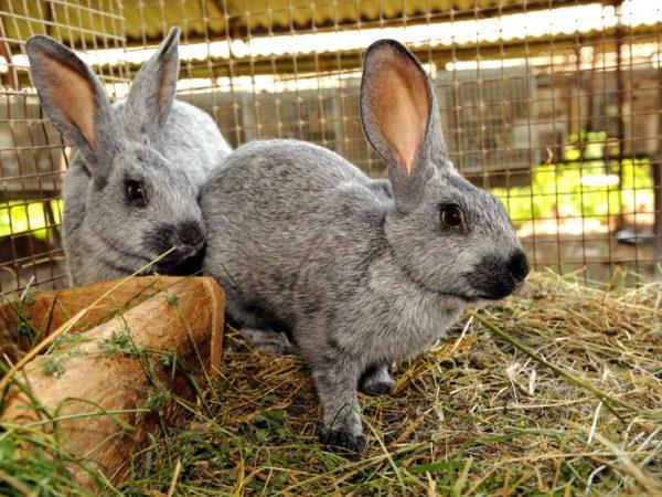 Клетки для кроликов можно расположить в хозяйственных помещениях, таких, как сарай, или прямо на улице, но тогда нужно сделать навес