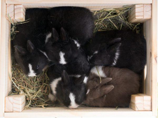 Причины разбрасывания крольчат - слишком холодная атмосфера в клетке