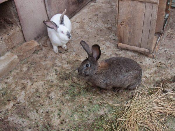 Крольчатник должен соответствовать следующим требованиям: он должен быть комфортным для проживания и размножения зверьков и для обслуживания человека