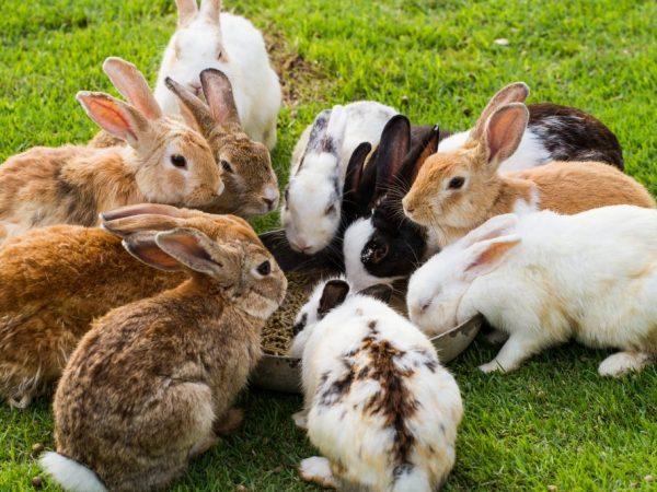 Кролики и зайцы травоядные – питаются травами, кореньями, овощами, древесной корой и другими растительными продуктами