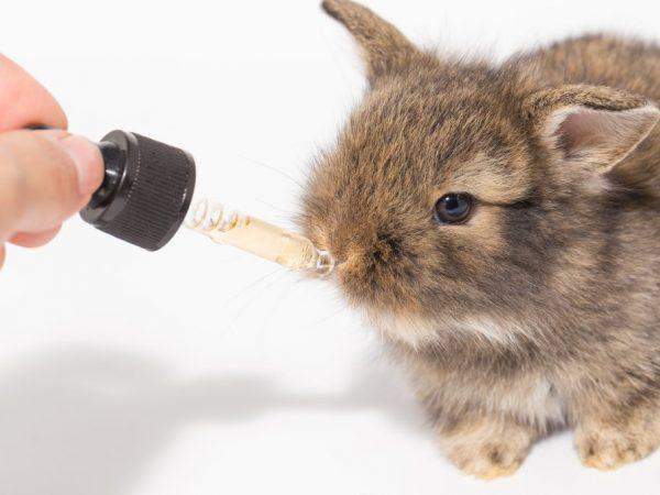 При употреблении этих витаминов организм кроликов насыщается всеми необходимыми элементами, которые нужны для энергичного роста молодняка