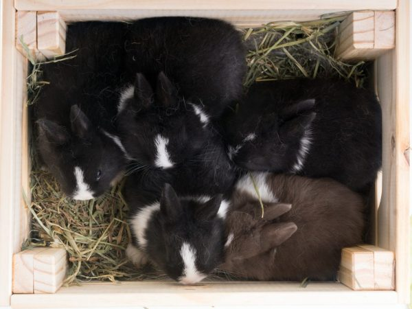 Если крольчиху напугать, она может раздавить детёнышей, поэтому клетку надо установить в спокойном и тёмном месте